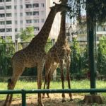 Our Unexpected Visit to the Saigon Zoo